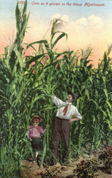 Corn as it growns in the Great Nortwest Postcard