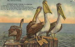 The Pelican Family