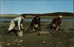 Digging for Maine Steamer Clams - a seafood treat