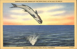 Tarpon in mid-air, hooked off the Texas Coast, in the Gulf of Mexico