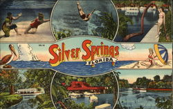 Views of Silver Springs