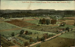 View from Mount Tolmie, Young Fruit Trees