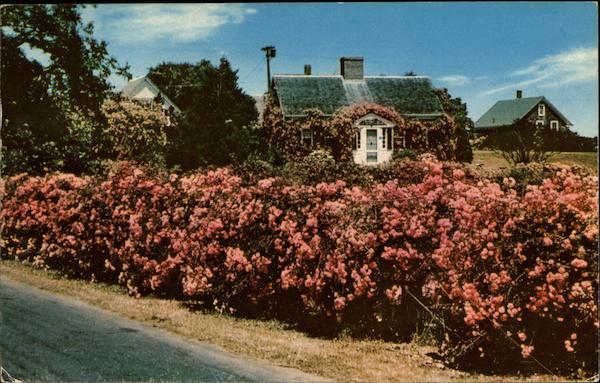 A Rose Covered Cottage Chatham Massachusetts
