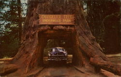 Chandelier Drive-Thru Tree