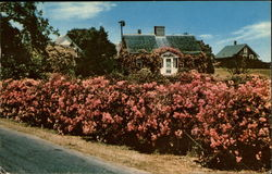A Rose Covered Cottage Postcard