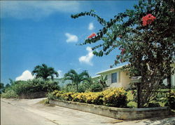 Home with Tropical Flowers Postcard