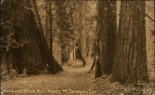 Redwood Drive in Muir Woods Mill Valley California