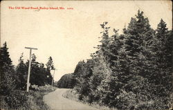 The Old Wood Road Postcard