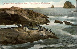Seals on Jagged Islet, West Coast of Washington