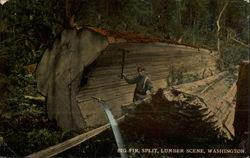 Big Fir, Split, Lumber Scene