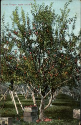 In an Oregon Apple Orchard