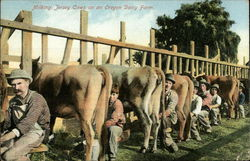 Milking Cows on an Oregon Dairy Farm