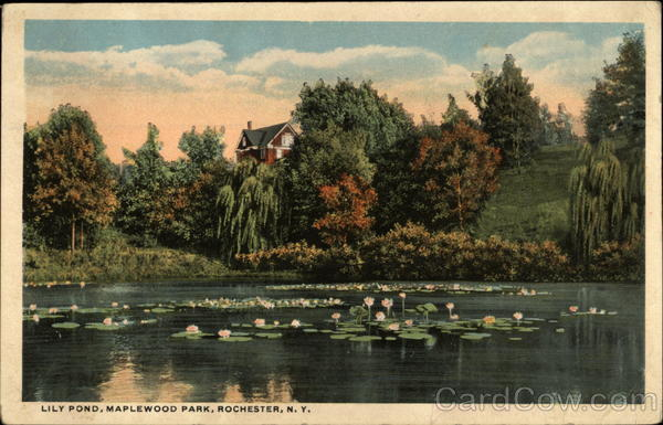 Lily Pond, Maplewood Park Rochester New York