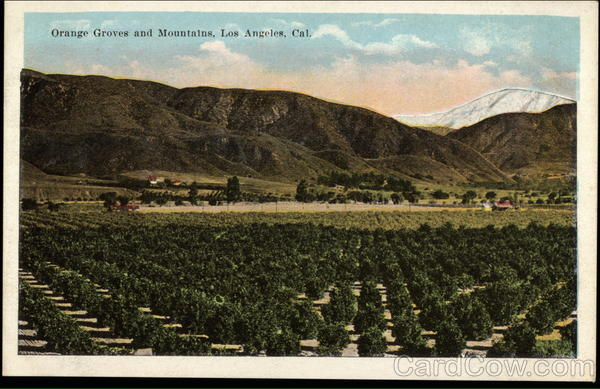 Orange Groves and Mountains Los Angeles California