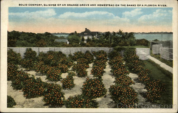 Solid Comfort, Glimpse of an Orange Grove and Homestead Florida