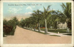 Beautiful Royal Palm Way
