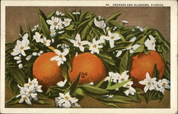 Oranges and Blossoms from Florida