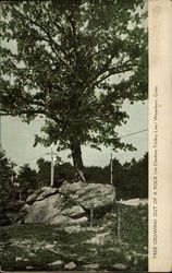 Tree Growing out of a Rock on Cheshire Trolly Line