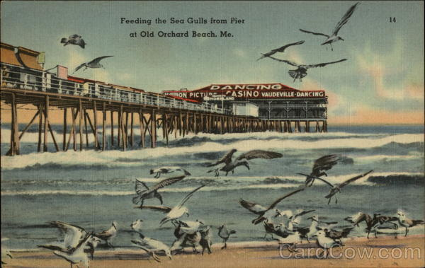 Feeding the Sea Gulls from Pier Old Orchard Beach Maine