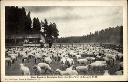 Sheep Ranch in Mountains, Sixty-five Miles west of Roswell