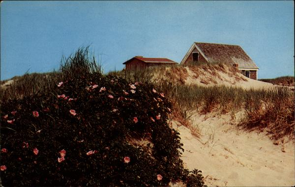 Shack on the dunes with wild roses Cape Cod Massachusetts
