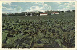 A Lancaster County Tobacco Field