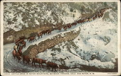 Cattle Drive in Raton Mountains