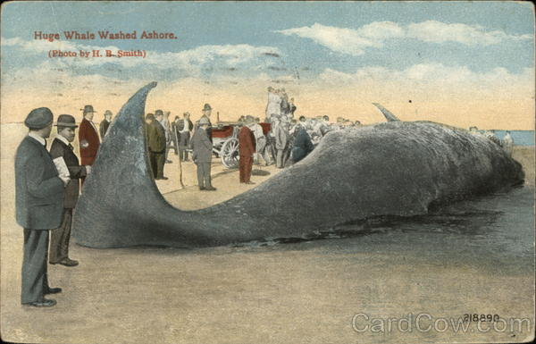 Huge Whale Washed Ashore