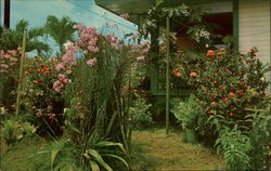 Guamanian's Love Their Gardens Postcard