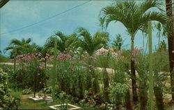 Royal Palms and Orchids