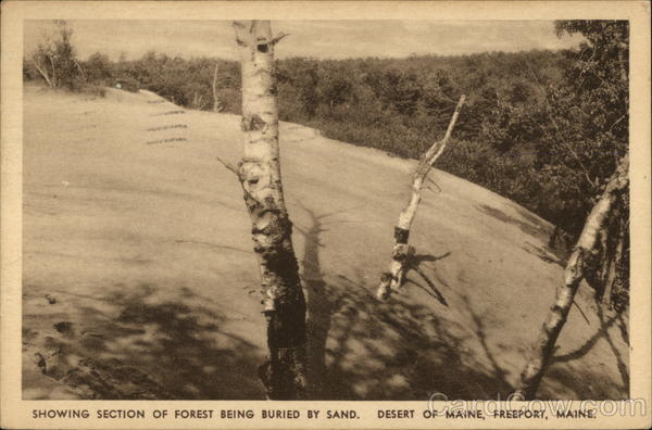 Showing Section of Forest Being Buried by Sand, Desert of Maine Freeport