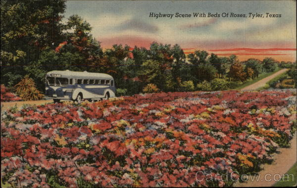 Highway Scene with Beds of Roses Tyler Texas
