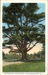Whittier Pine, Center Harbor