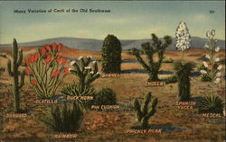 Many Varieties of Cacti of the Old Southwest