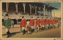 Parading the Greyhounds