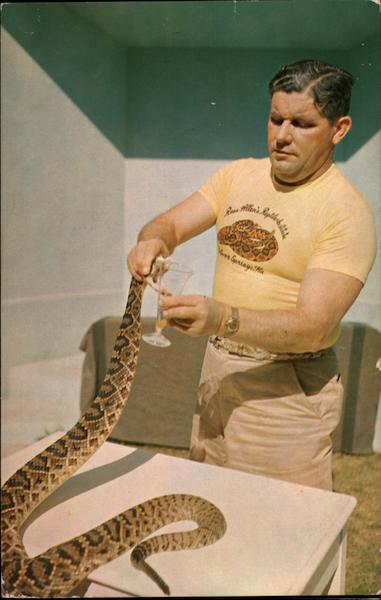 Ross Allen 'Milking' a Diamond Back Rattlesnake for Venom Silver Springs Florida