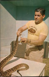 Ross Allen 'Milking' a Diamond Back Rattlesnake for Venom