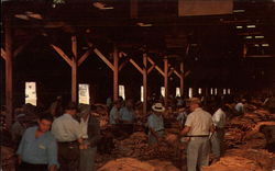 Interior of a Tobacco Warehouse during an Auction Sale