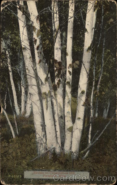 Birches on Constitution Hill Pittsfield Massachusetts