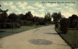 Drive in Brackenridge Park Postcard