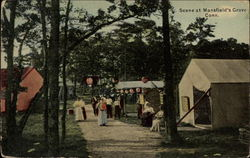 Scene at Mansfield's Grove Postcard