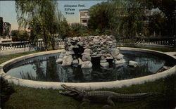 Alligator Pool
