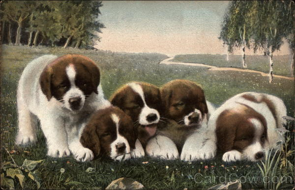 Five Brown and White Puppies in a Field Dogs