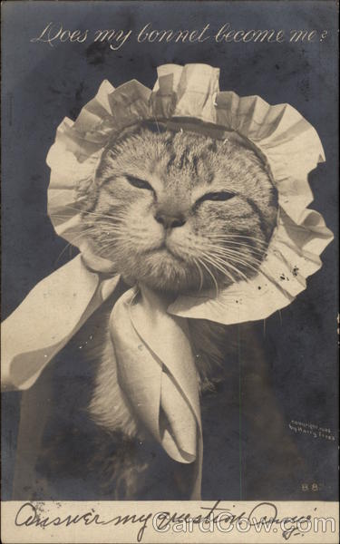 Kitten in a Bonnet Cats