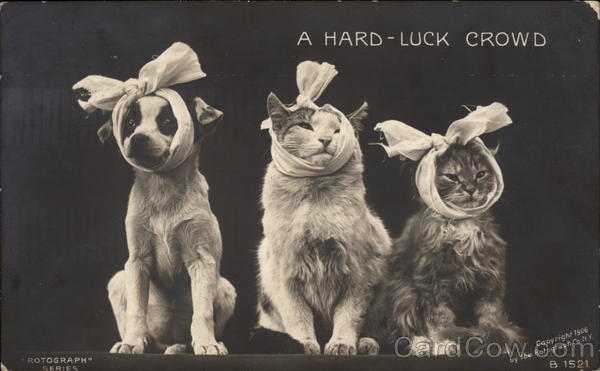 A Hard-Luck Crowd Cats