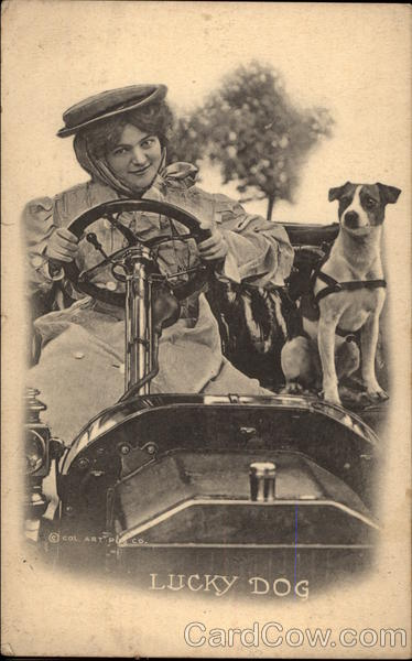 Woman Driving with a Dog Dogs