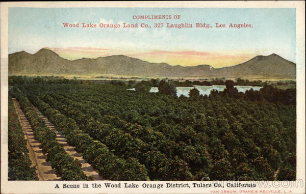 A scene in the Wood Lake Orange District, Tulare Co Los Angeles California