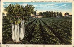 Celery Fields in The Celery City
