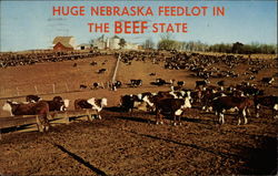 Huge Nebraska Feedlot in Beef State