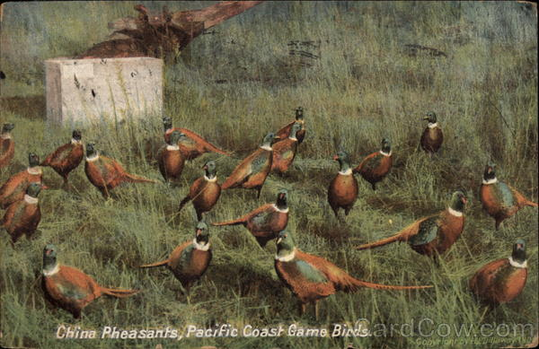 China Pheasants, Pacific Coast Game Birds